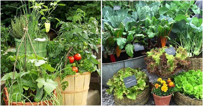 12 Hacks to Build A Creative Container Vegetable Garden
