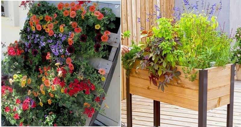 15 Eye-Catching DIY Pallet Garden Ideas
