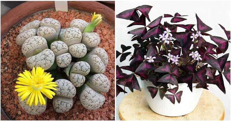 10 Lovely Houseplants To Decorate Your House