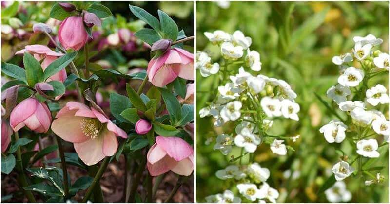 11 Plants That Always Keep Green In Winter