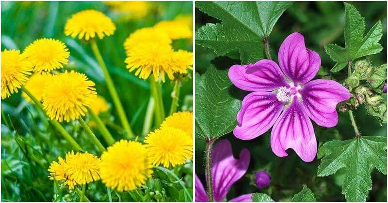 18 Beneficial Weeds In Garden