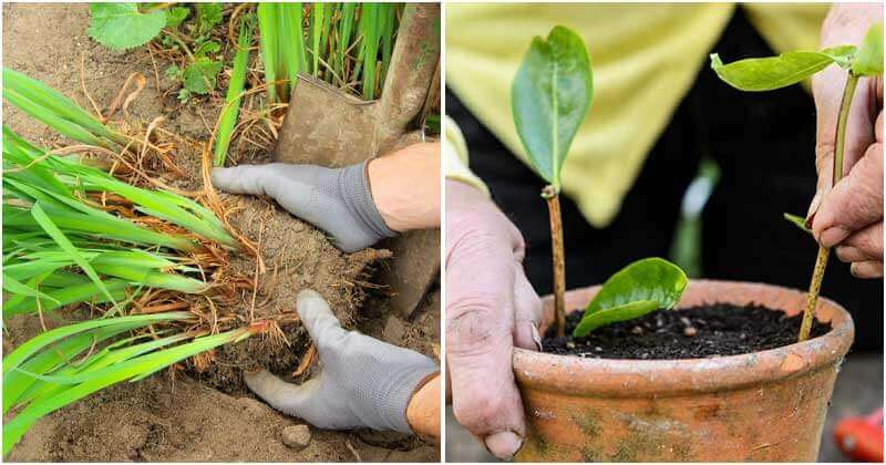 5 Interesting Ways To Have Free Plants