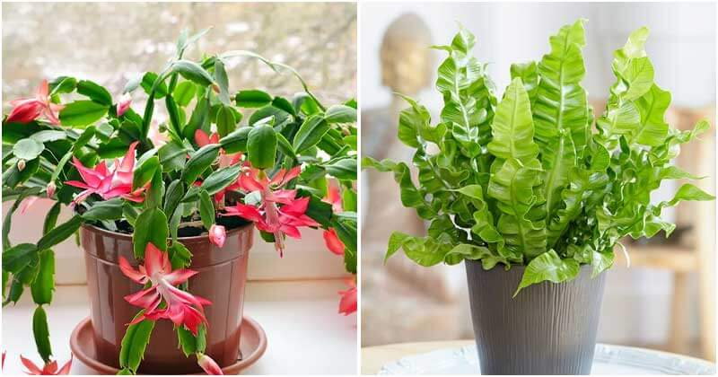 7 Best Plants Give Friend As Gifts