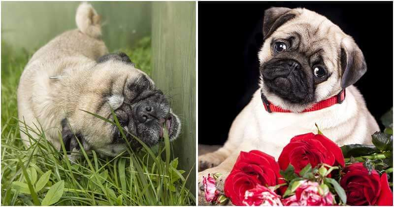 9 Plants That Your Dog Love Eating
