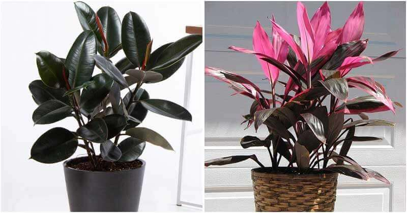 Plants Can Attract Money, Fortune And Luck To Home