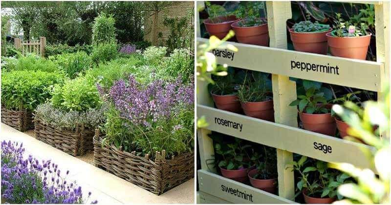 21 Cheap and Easy Herb Garden Ideas