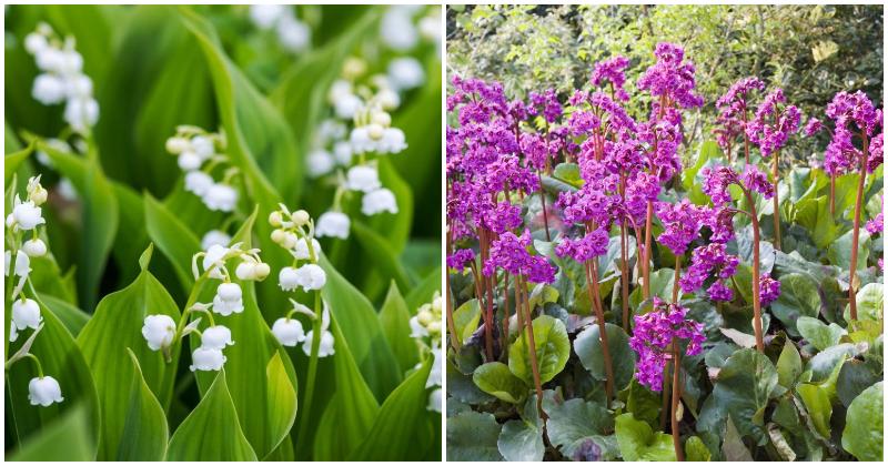 15 Beautiful Grow-In-Shade Perennial Plants