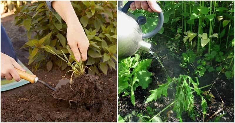 11 Best Tips To Control Weeds In The Garden