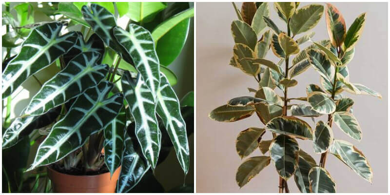 12 Stunning Plants With Waxy Leaves