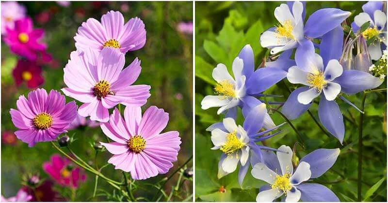 20 Easiest To Grow Flowers For Beginners