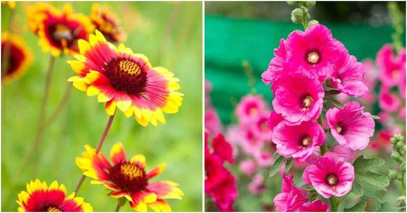 21 Unique Plants That Have Beautiful Flowers To Attract Butterflies