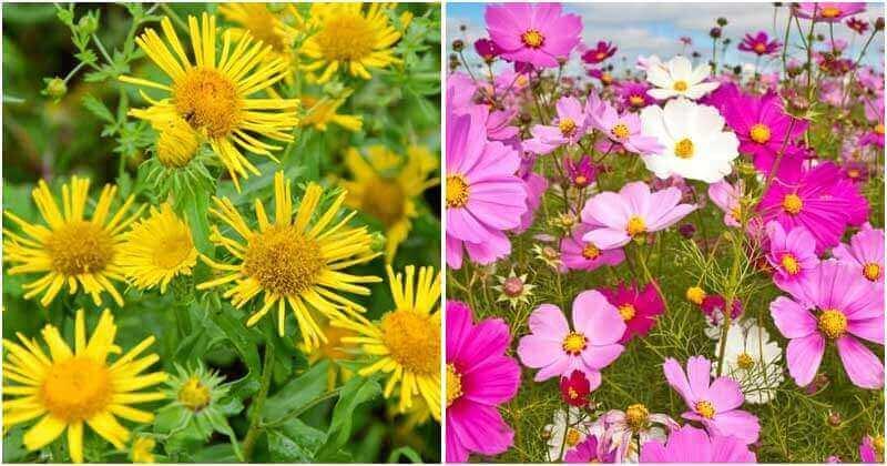 30 Best Beautiful Tall Flower Types