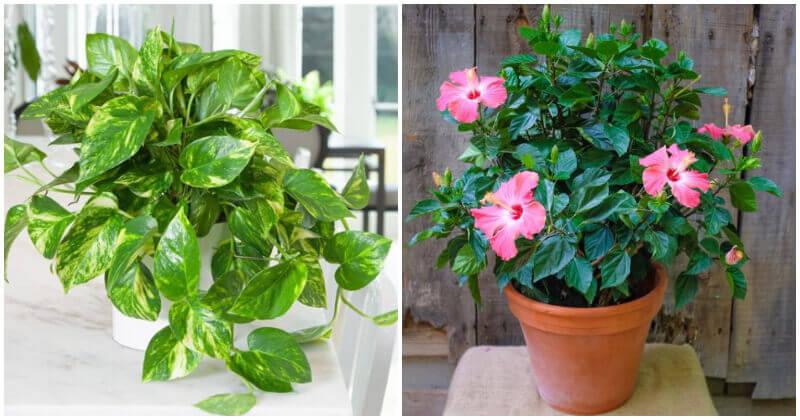 7 Fast-Growing Indoor Plants
