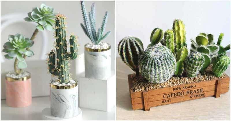 Mind-blowing DIY Cactus Garden Ideas