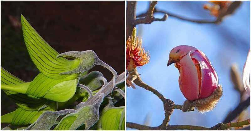 Unique Flowers With Look Like Birds