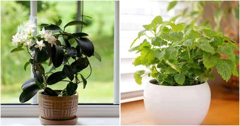15 Best Scented Houseplants That You Will Love