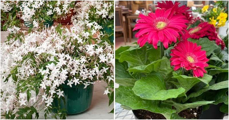 10 Best Indoor Plants To Combat Depression