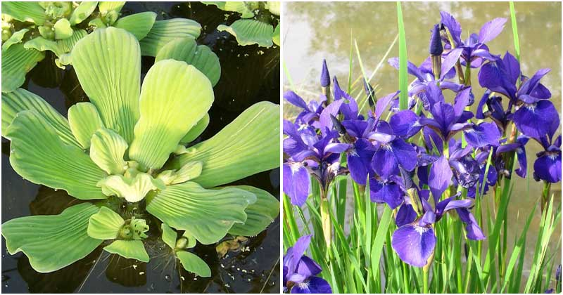 10 Popular Aquatic Plants For Ponds and Water Features