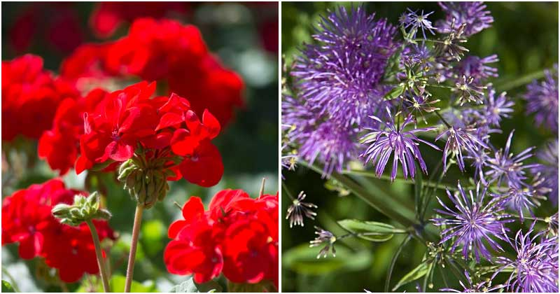 15 Plants That Can Repel Bees And Wasps