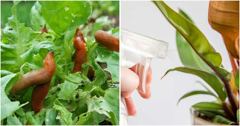 7 Amazing Tide Uses In The Garden