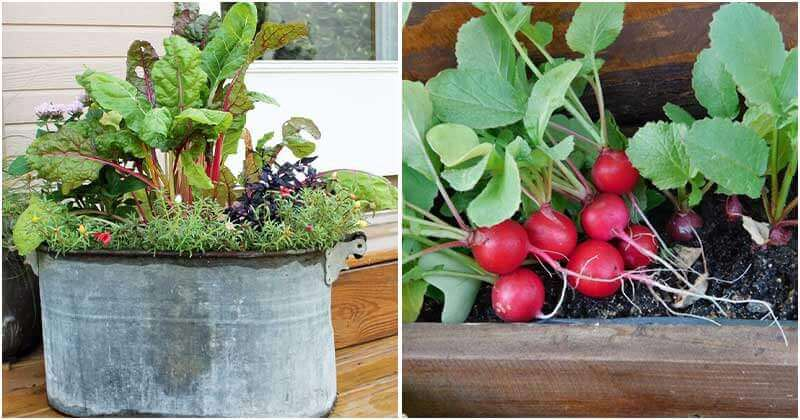 Top 11 Vegetables That Can Grow Well In Containers