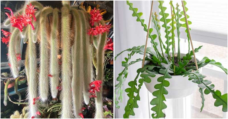 26 Appealing Pictures Of The Best Beautiful Hanging Succulents