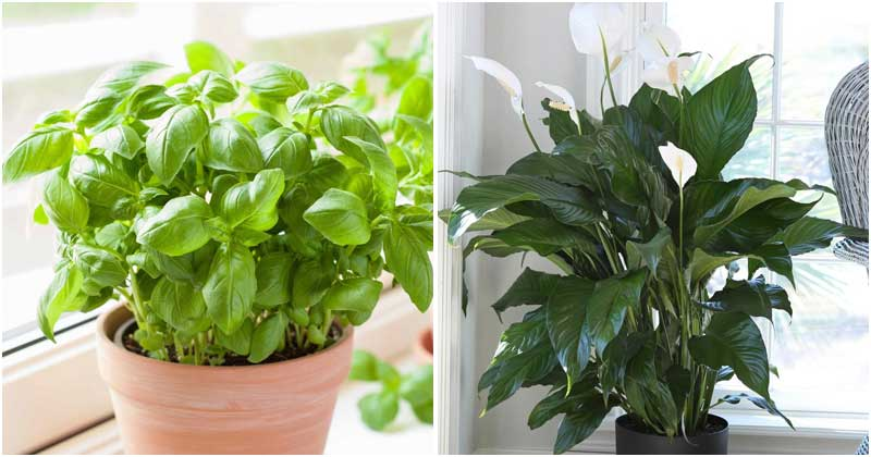 26 Easy-to-grow Plants For Kitchen Windowsill