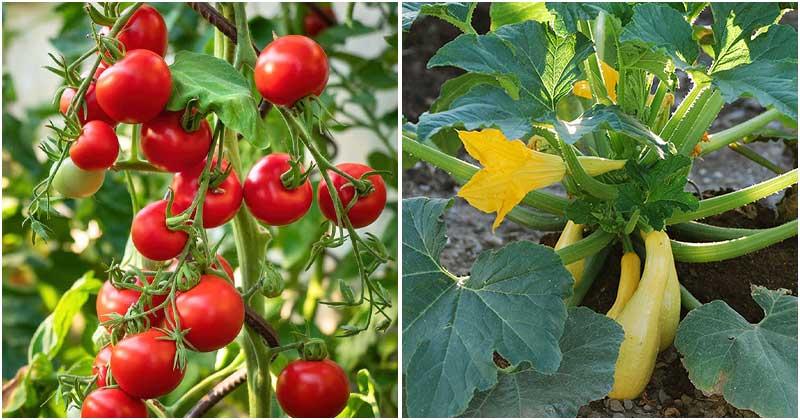 12 Common Vegetables For Alkaline Soils